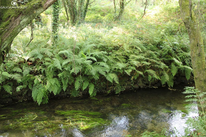 Río Furnia
