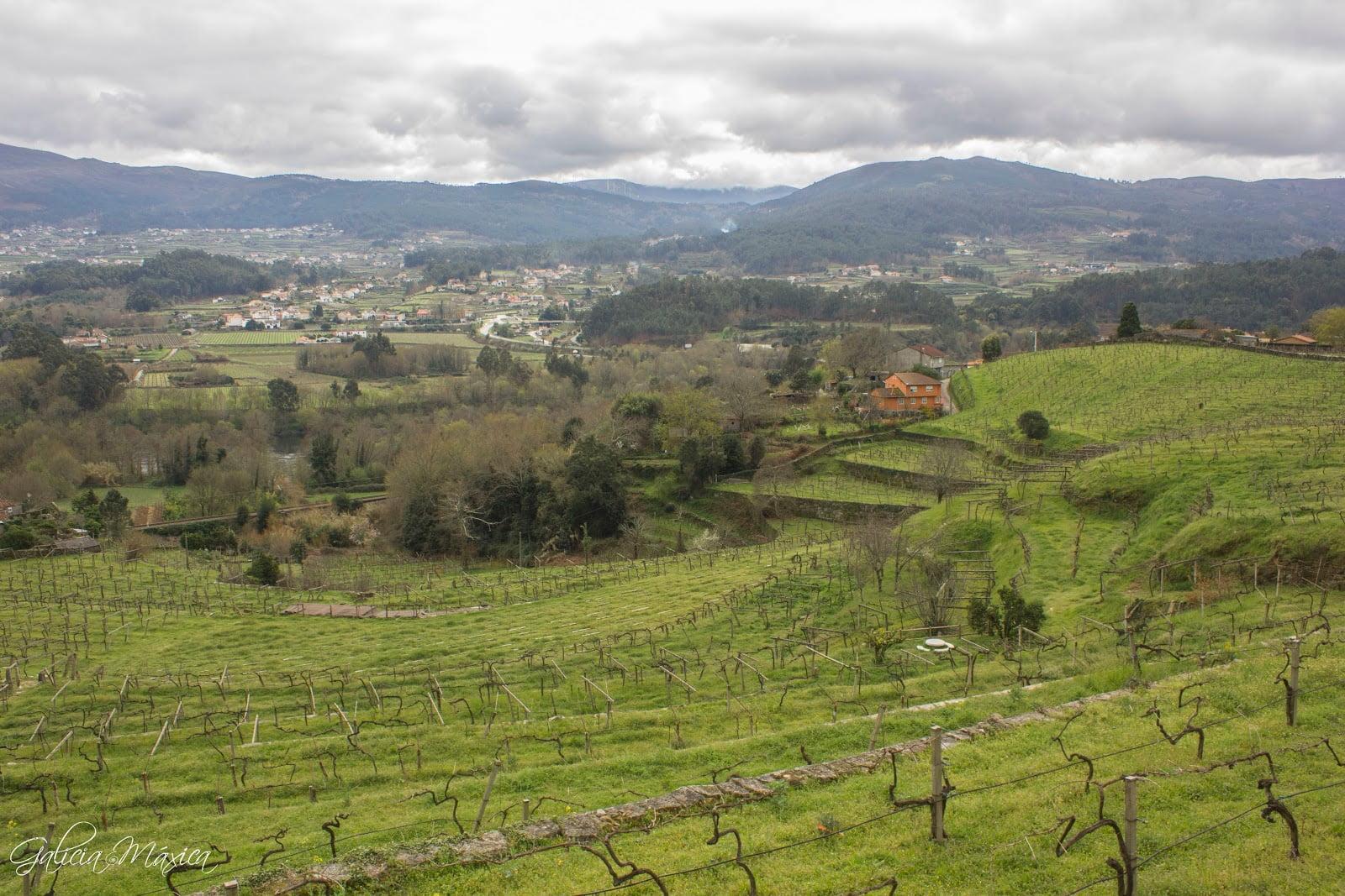 Vistas del valle del Miño, Arbo y Portugal. Vides.