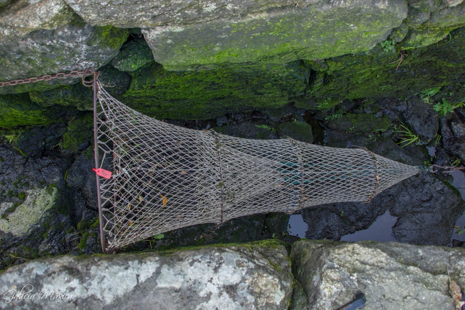 Vitirón: Red de pesca para la lamprea