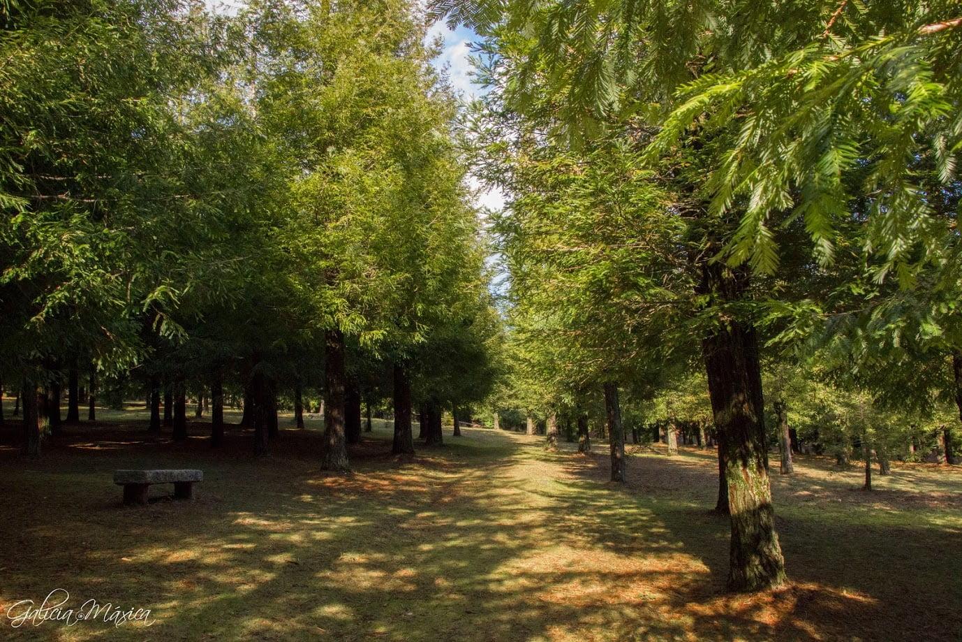 Bosque de Secuoyas